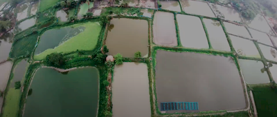 Aerial Image of Fish Ponds